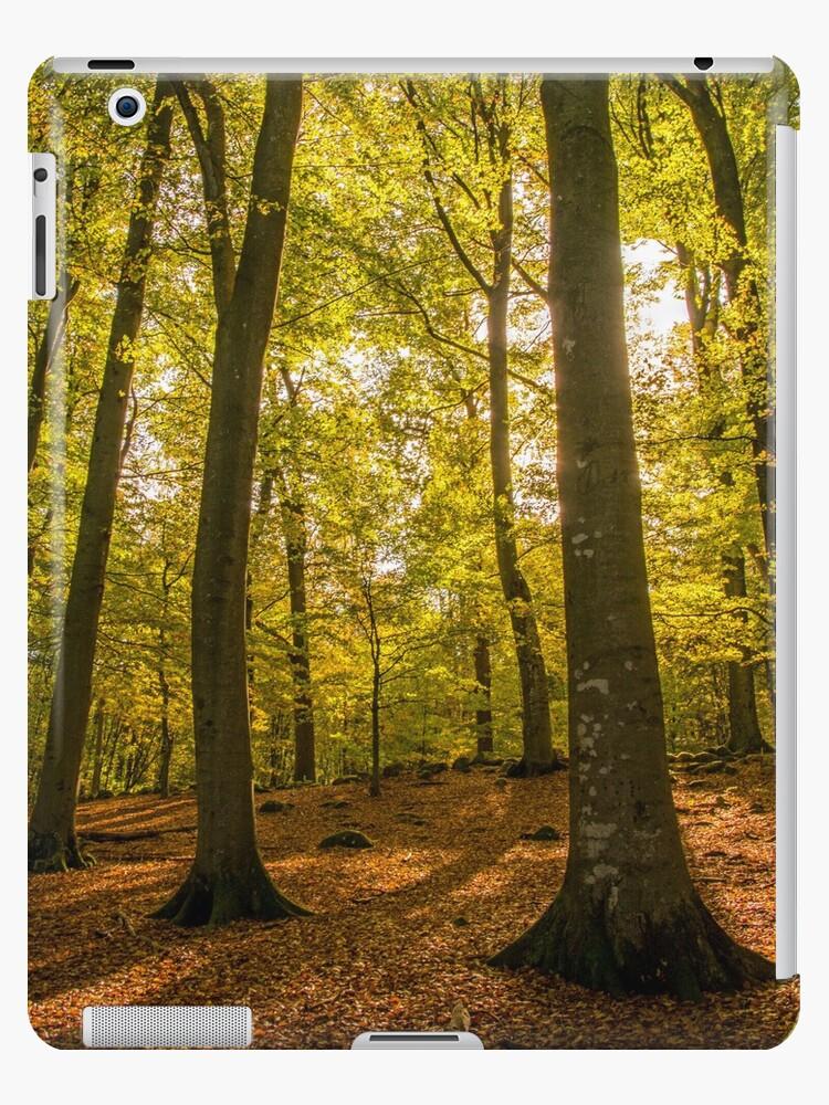 scenic autumn forest by Steve Björklund