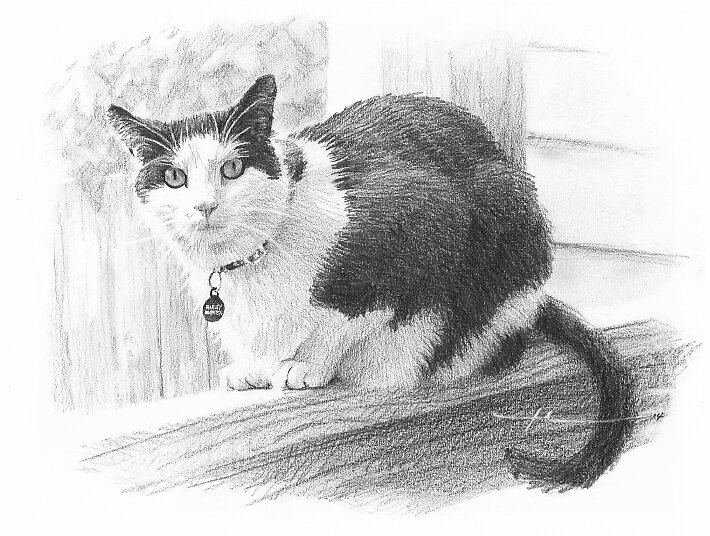 Black & white cat memorial drawing by Mike Theuer