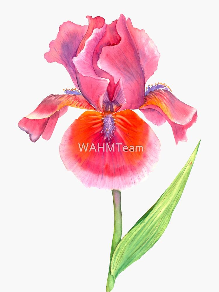 Iris Watercolor, Floral, Flower by WAHMTeam