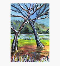 Sketching Trees Photographic Print