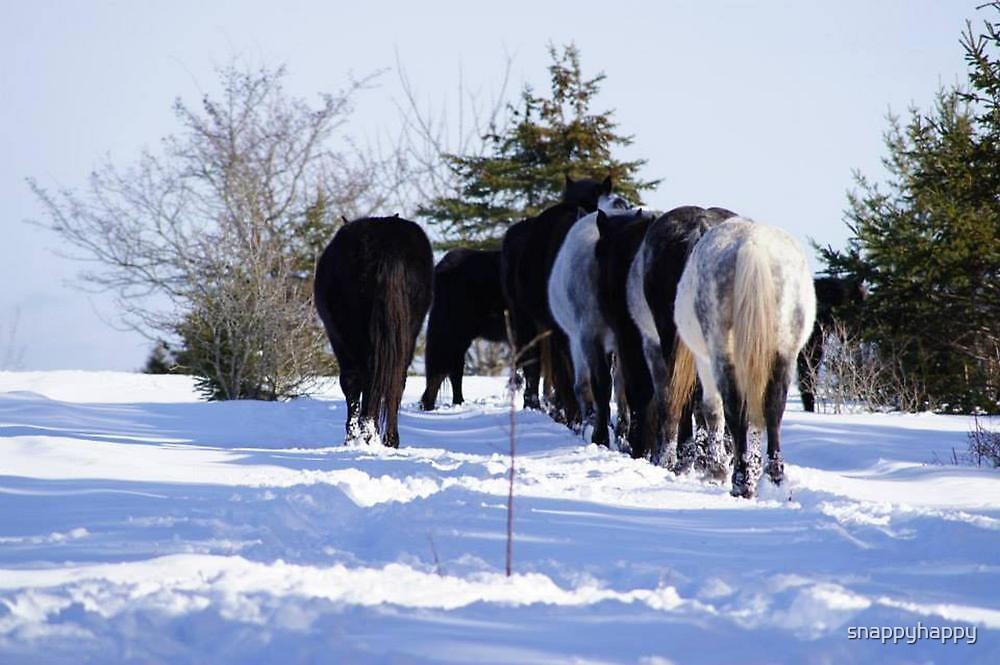 Windsor, Nova Scotia, Wild Horses by snappyhappy