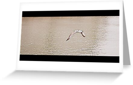 Seagull in flight by orsinico