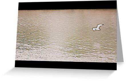 Seagull in flight by orsinico