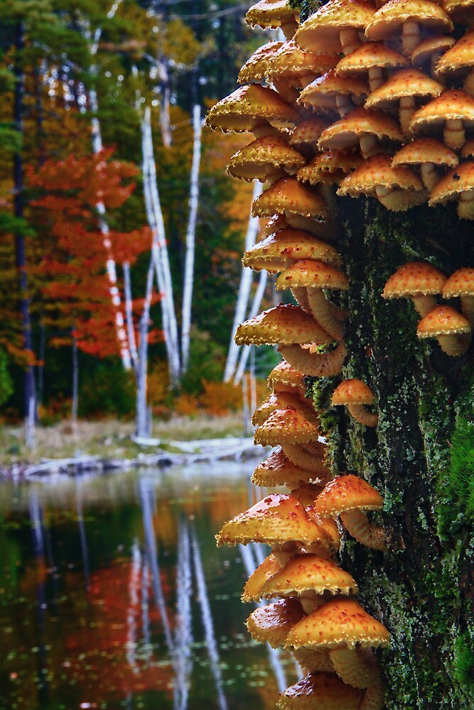 Woodland Fungi by Nazareth