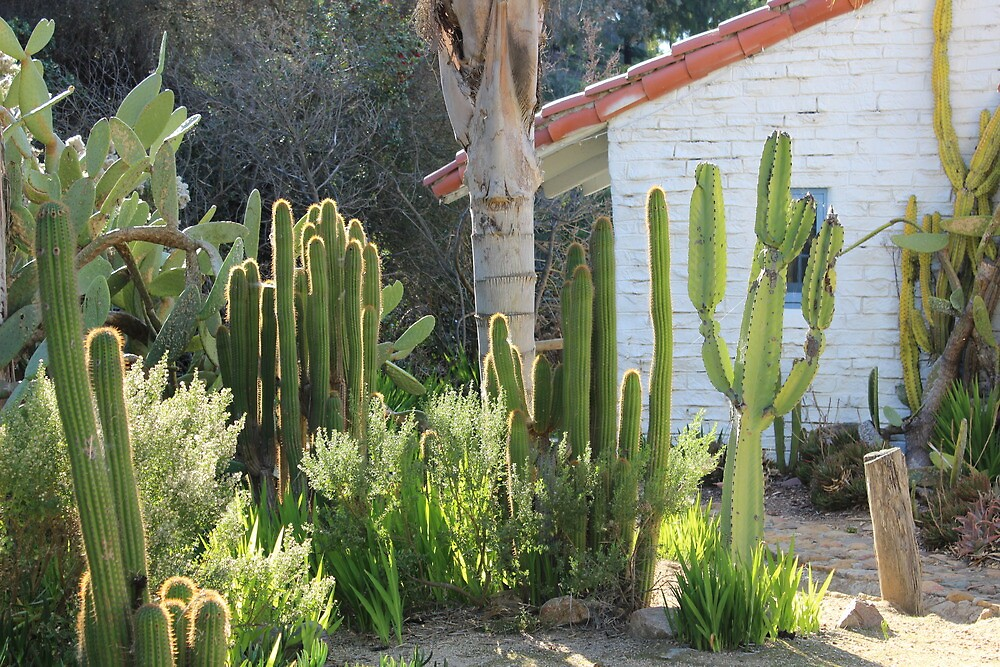 Cacti Ranch by Murad Abel