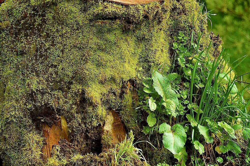 Stumps Don't Die  by Cee Neuner