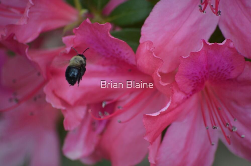 Bumble by Brian Blaine
