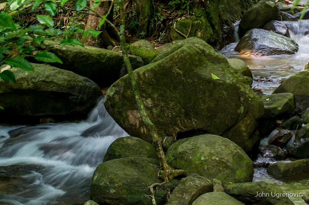 Rainforest of Thailand by John Ugrenovic