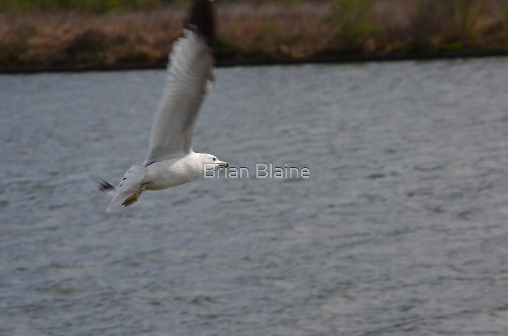 Glider by Brian Blaine