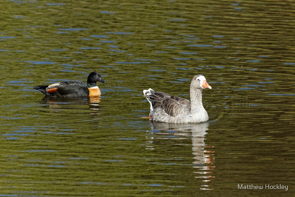 Greylag Hybrid Goose (Genus Anser) by Matthew Hockley