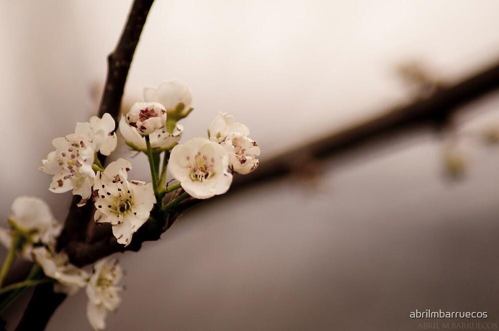 Flower by abrilmbarruecos