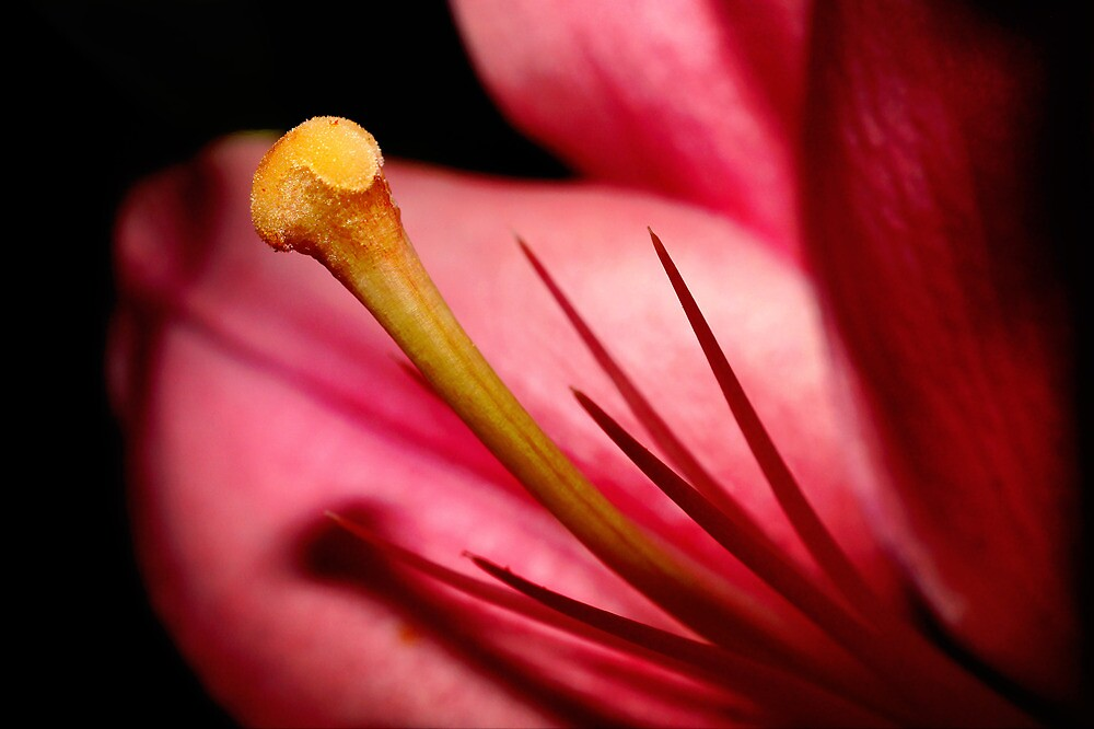 Lily Flower by Jill Patterson