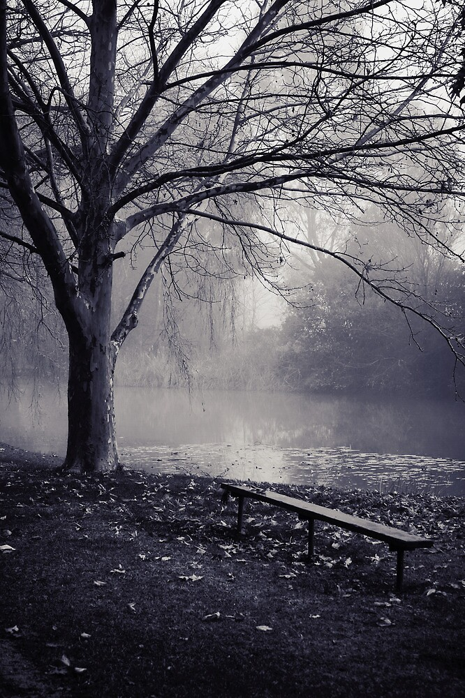 Misty Park by Jill Patterson