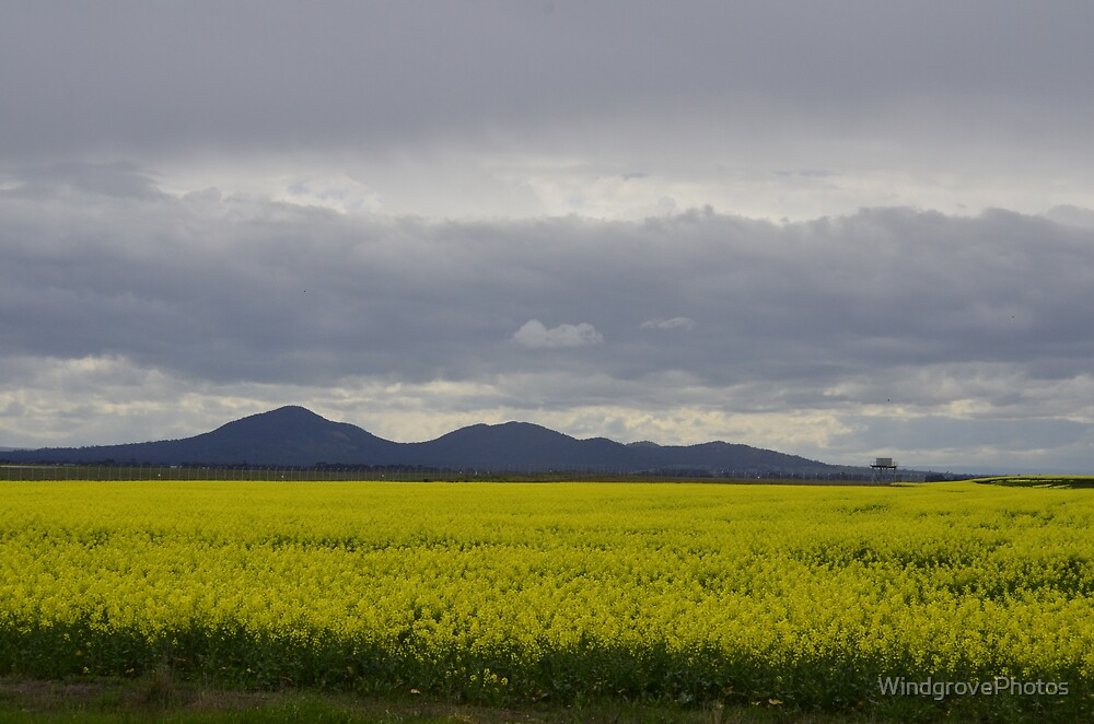The You Yangs from Avalon by WindgrovePhotos