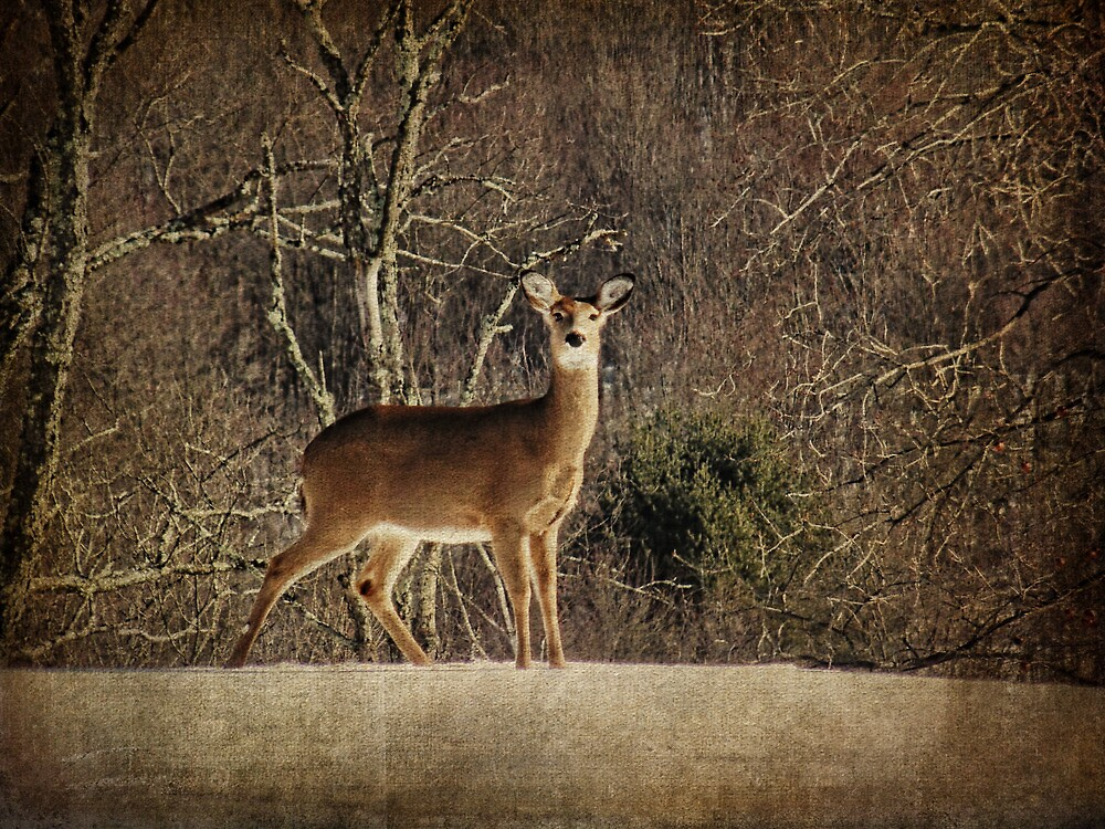 Be Kind to the Deer by PineSinger