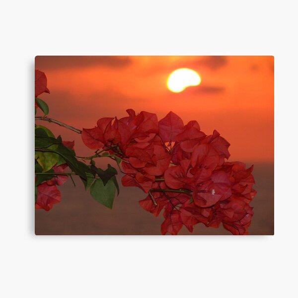 bougainvilleas in sunset II - bougainvilleas en puesta del sol  Canvas Print