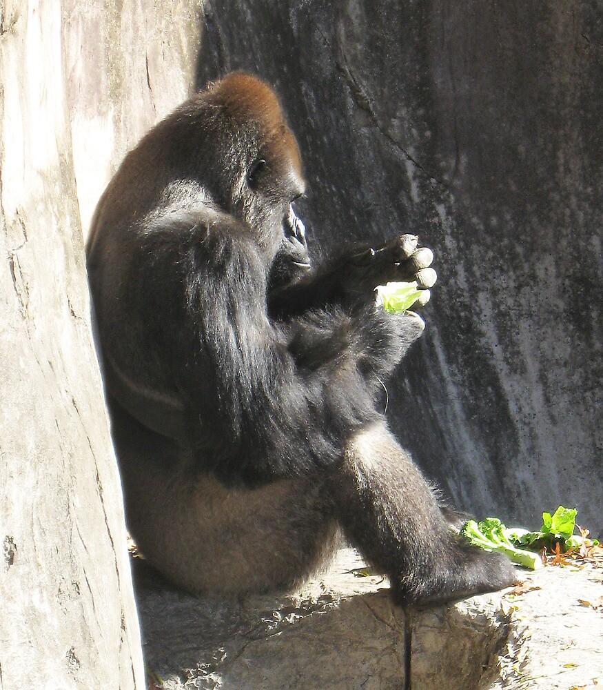 Gorilla Sitting by rhamm