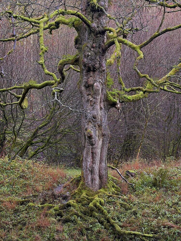 Tolkien Tree by Alextaylorphoto