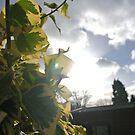Sunlight so bright by Whiteside-Art