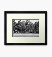 Southern Trees-South Carolina Framed Print