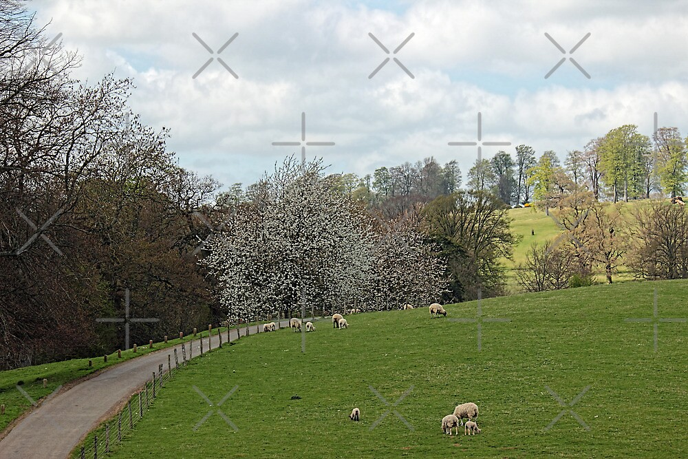 Fawsley Countryside Northamptonshire by Avril Harris