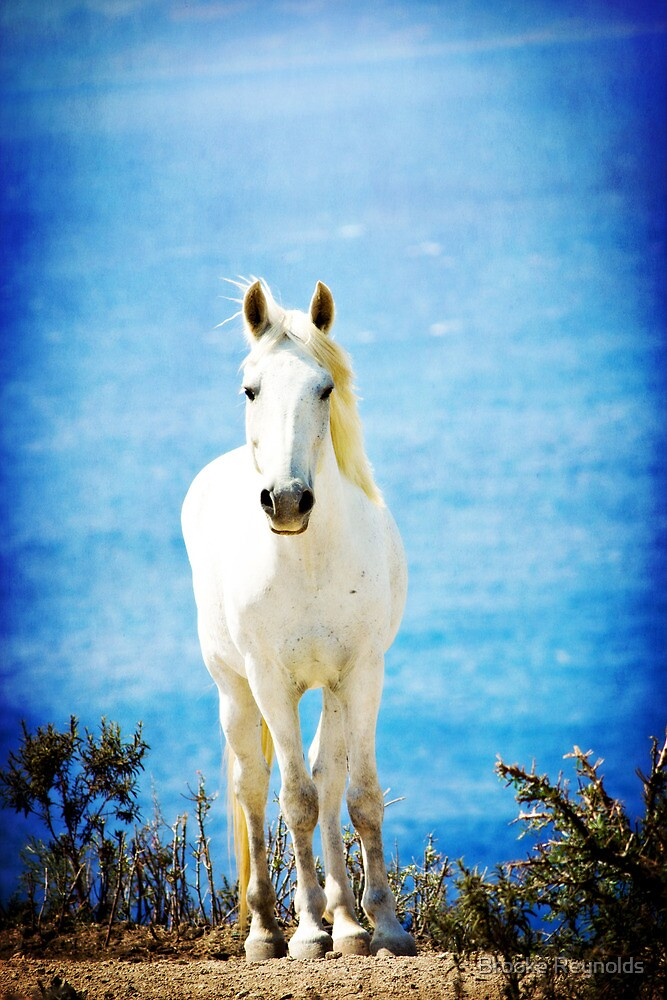 { wild wild horse } by Brooke Reynolds