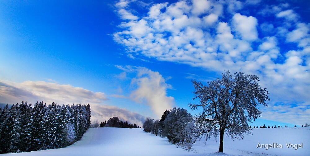 January Light by Angelika  Vogel