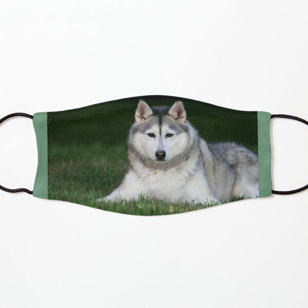 Crazy Husky GUY-chien chiot pet Cadeau Enfants T-Shirt