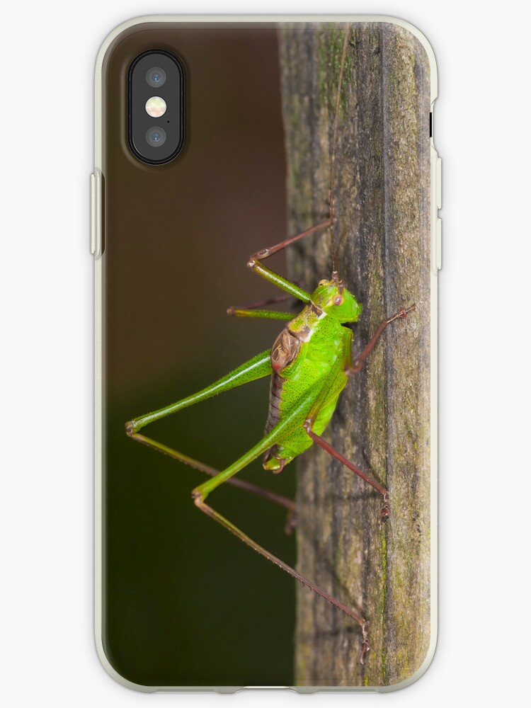 Green grasshopper up close and personal by Martyn Franklin