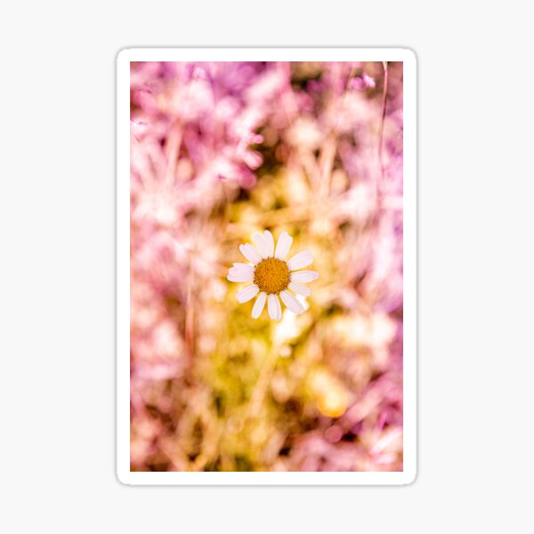 Marguerite, field flowers and gradient Sticker