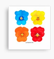 COLORED FLOWERS EXPERIMENT Canvas Print