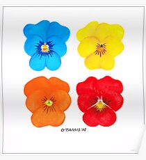 COLORED FLOWERS EXPERIMENT Poster