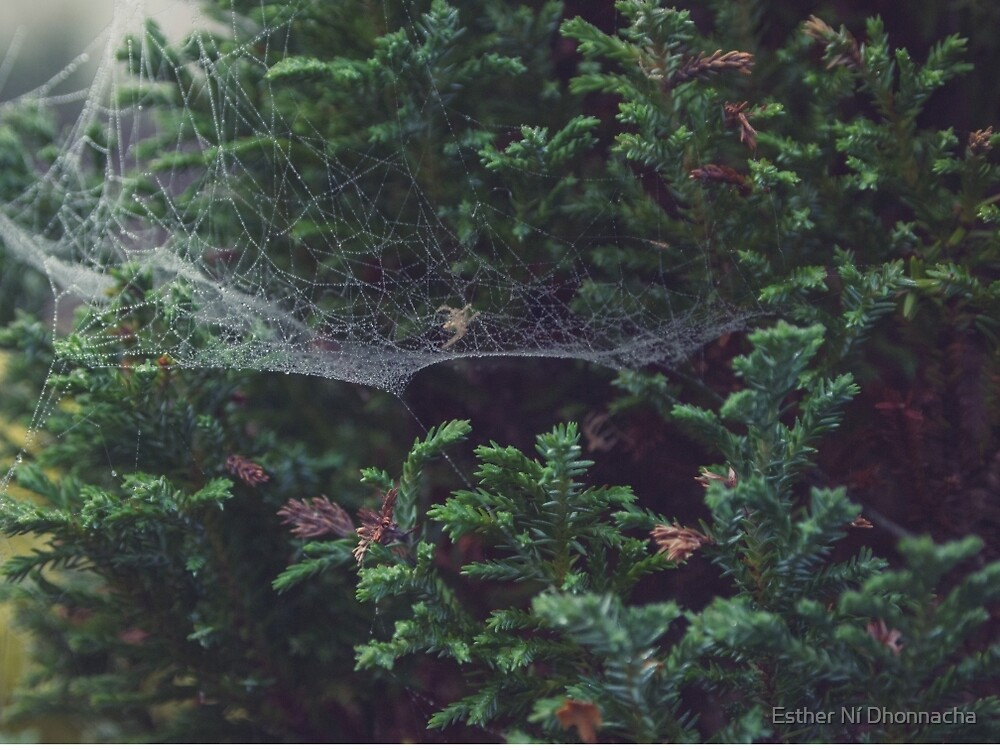 Spiderweb 3 by Esther Ní Dhonnacha