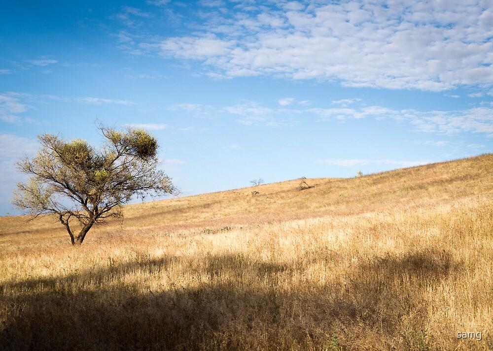 Tree, Moralana Scenic Route by samg