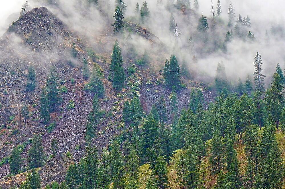Montana Mists by Harry Oldmeadow