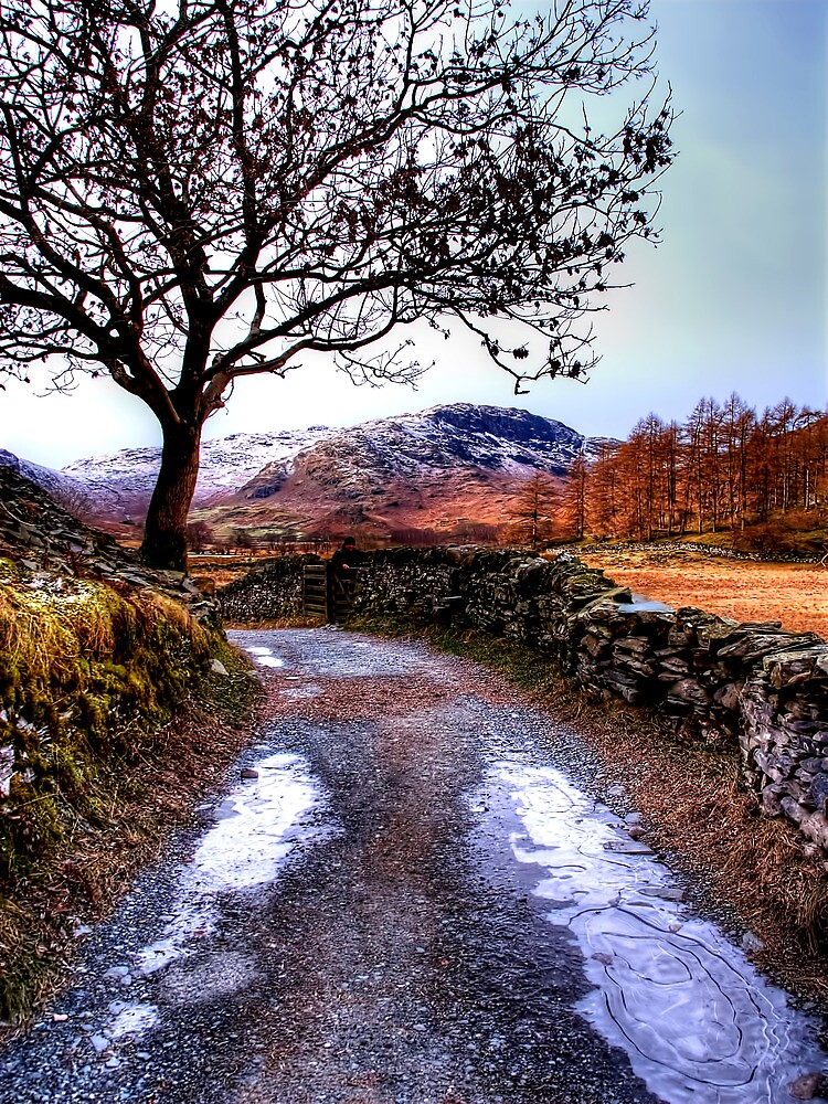 The Lane by Stephen Smith