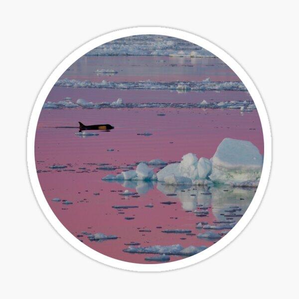 Orca Sunset (Round) Sticker