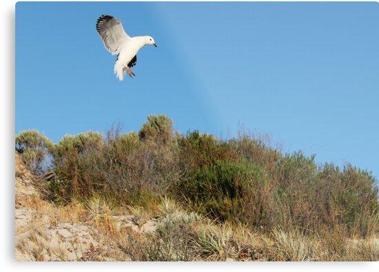 Bird life by Cocopop19