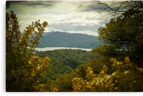 Queen Charlotte Sound by mlphoto