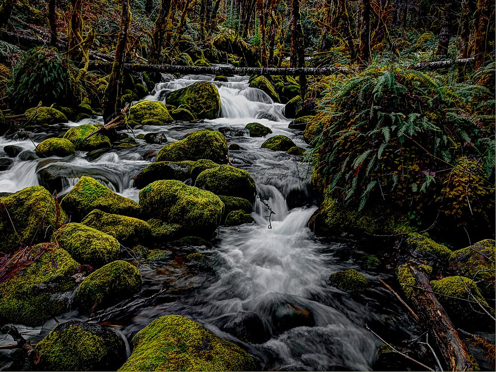 A Day In The Woods  by Charles & Patricia   Harkins ~ Picture Oregon