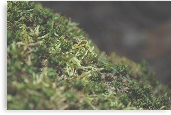 Moss by kaelynnmara