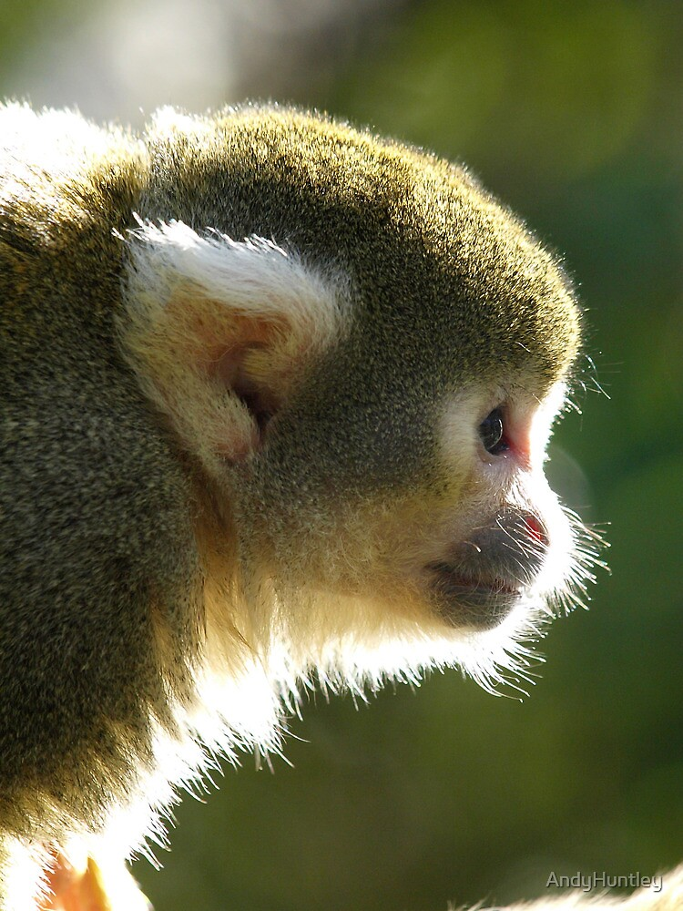 Squirrel Monkey by AndyHuntley