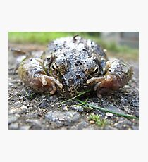 Toad Photographic Print