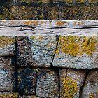 Mousehole Harbour Wall by Jono Hewitt