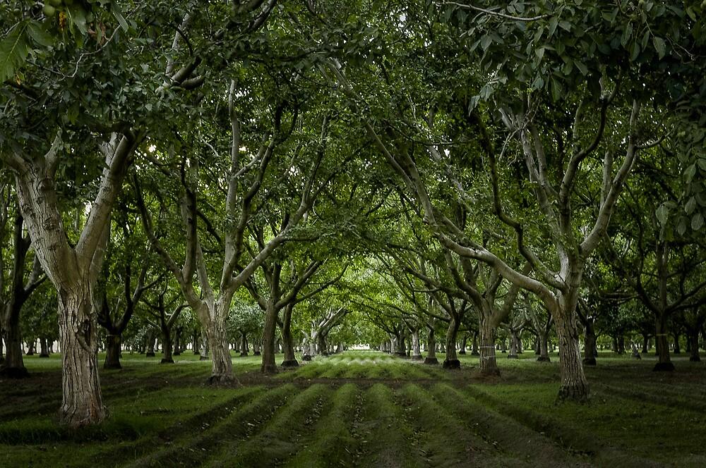 Orchard by barcherphoto