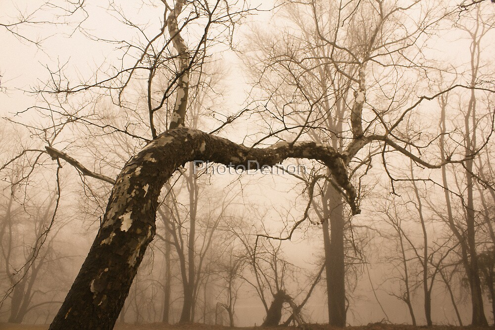 The Hanging Tree by PhotoDemon