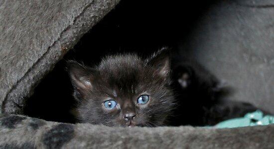 Little Miss Blue Eyes by Ladymoose