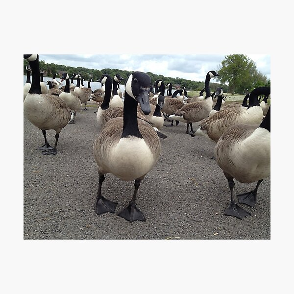 Duck Don't Care Photographic Print