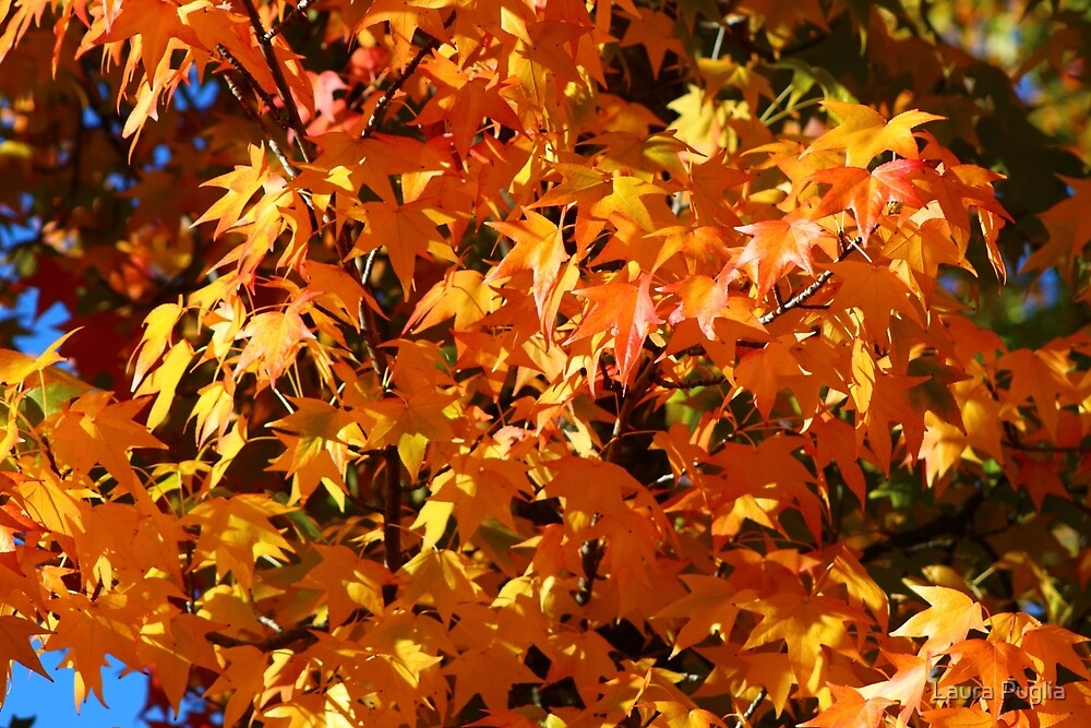 Fall Is Here by Laura Puglia