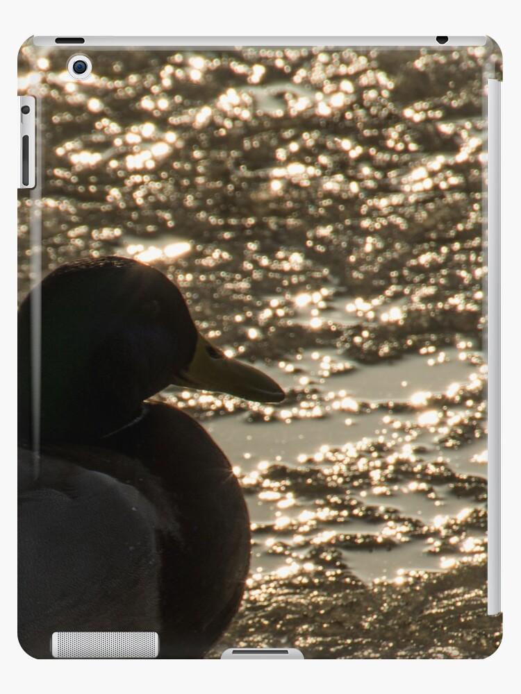 bird in sunset on ice by Steve Björklund